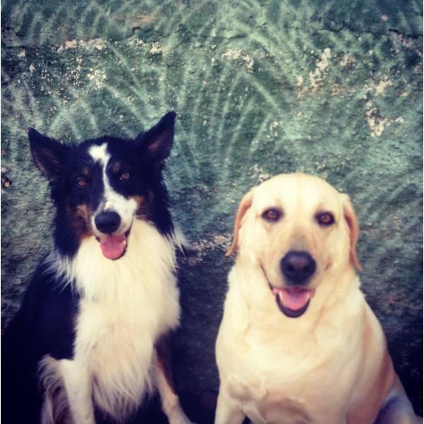 Preços de Adestrador para Cachorros em Pinheiros - Adestrador de Cãesno Brooklin