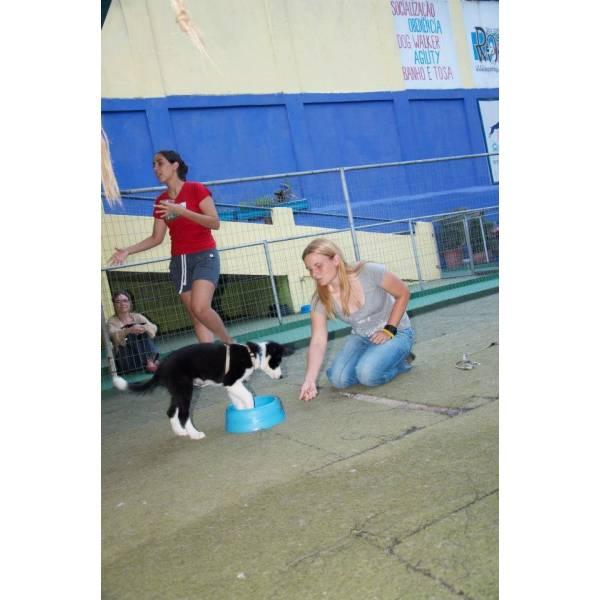 Preços de Adestrador para Cachorros no Jardim América - Adestrador Canino
