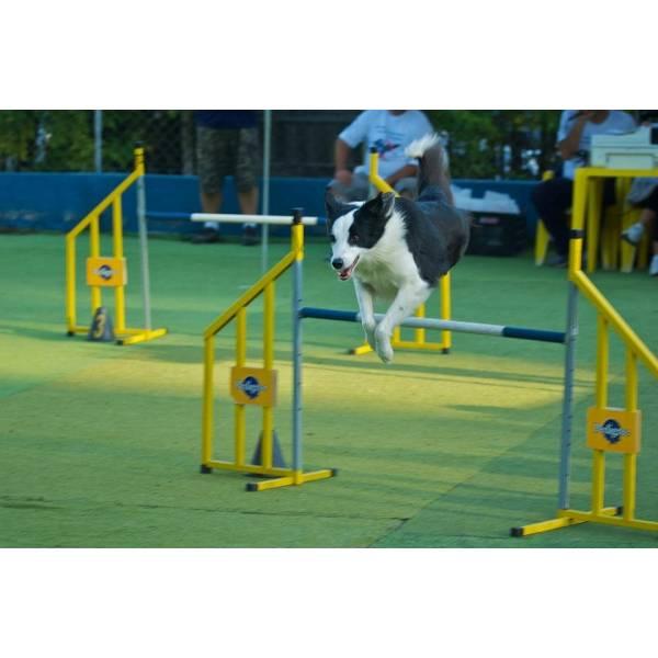 Preços de Adestrador para Cão no Ibirapuera - Serviço de Adestrador de Cães