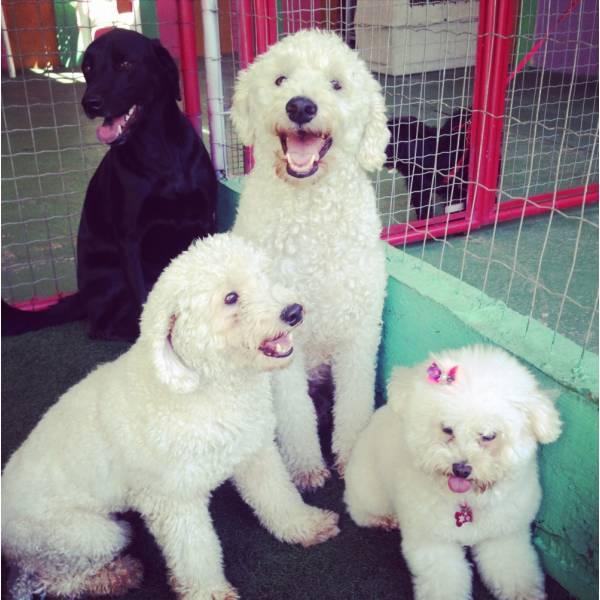 Preços de Adestrador para Cão no Jardim Europa - Adestrador de Cãesem Santo Amaro