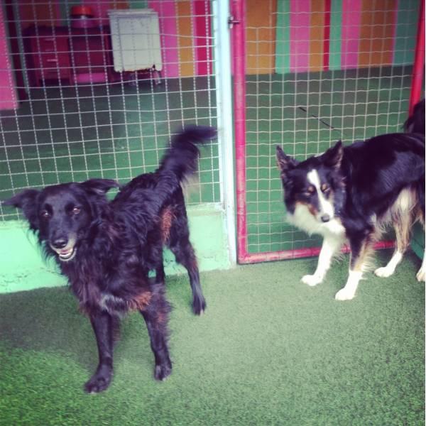 Preços de Adestradores para Cachorro em Itapecerica da Serra - Adestrador de Cãesno Brooklin