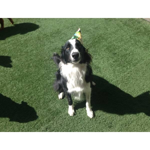 Preços de Adestradores para Cachorro na Cidade Ademar - Adestrador de Cãesno Brooklin