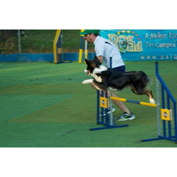 Preços de Adestradores para Cachorro no Jabaquara - Adestrador Profissional