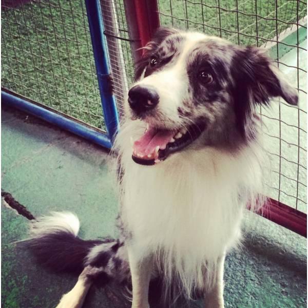 Preços de Adestradores para Cachorro no Jockey Club - Adestrador de Cãesno Butantã