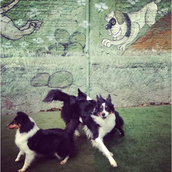 Preços de Adestradores para Cães em Embu Guaçú - Adestrador de Cãesno Brooklin