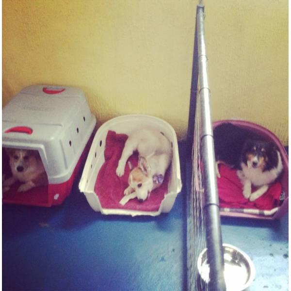 Preços de Adestradores para Cães no Ibirapuera - Adestrador de Cãesno Brooklin