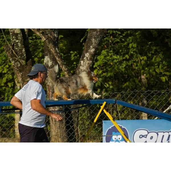 Preços de Adestradores para Cães no Jardim Paulista - Adestrador de Cãesem Cotia