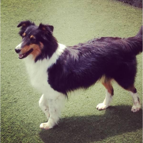 Preços de Adestradores para Cão no Jardins - Adestrador de Cãesno Brooklin