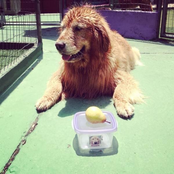 Preços de Adestramento de Cachorro em Raposo Tavares - Adestramento de Filhotes