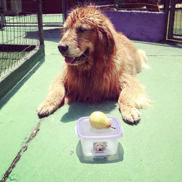 Preços de Adestramento de Cachorro na Vila Andrade - Adestramento Cachorro