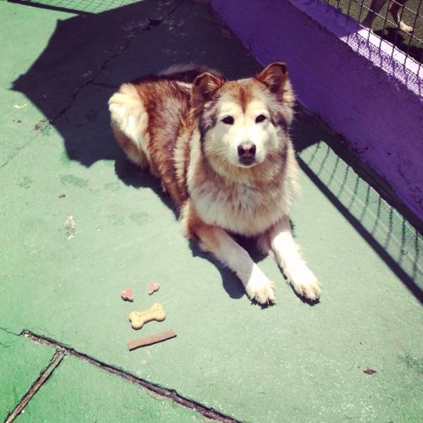 Preços de Adestramento de Cães em Itapevi - Adestramento de Cachorros