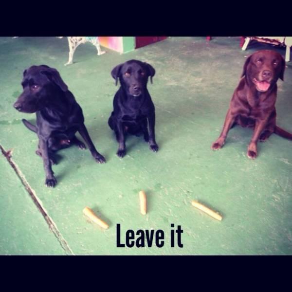 Preços de Adestramento de Cão no Jockey Club - Adestramento de Cachorros