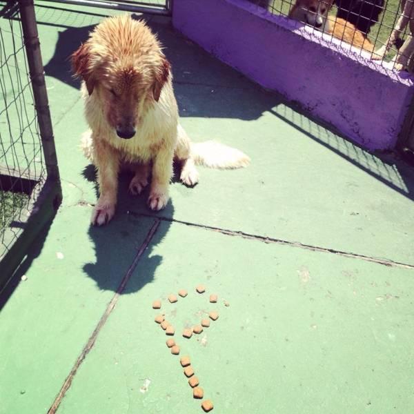 Preços de Adestramento para Cachorros em Cotia - Adestramento Canino
