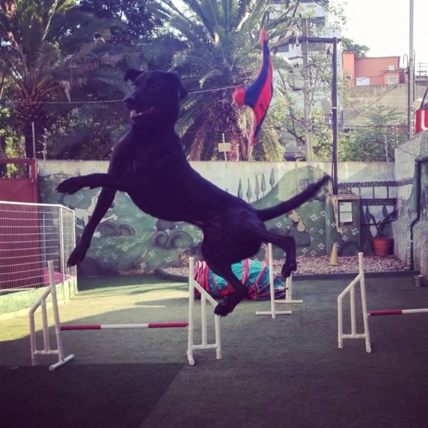Preços de Adestramento para Cães no Jardim Paulistano - Adestramento Cachorro