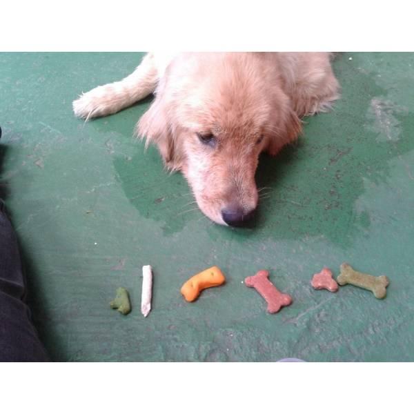 Preços de Adestramento para Cão no Pacaembu - Adestramento de Cães Filhotes