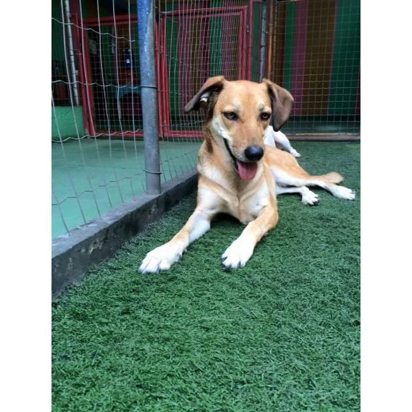 Preços de Daycare para Cachorro no Jardim América - Serviço de Daycare Canino