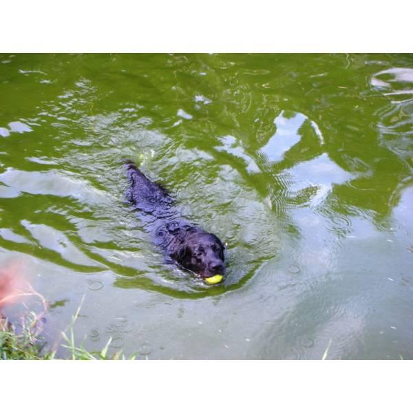 Preços de Hotéis de Cachorro na Cidade Jardim - Hotel para Cães em SP