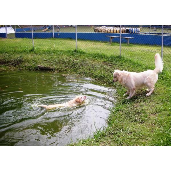 Preços de Hotéis de Cães na Vila Leopoldina - Hotel para Cães em SP