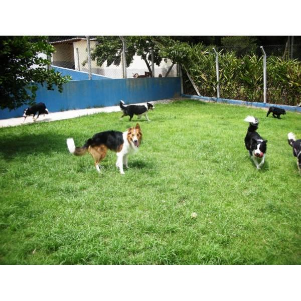 Preços de Hotéis para Cachorros no Rio Pequeno - Hotel para Cães em SP
