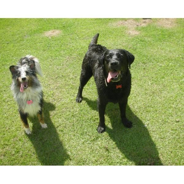 Preços de Hotéis para Cães em Itapevi - Hotel para Cães em SP
