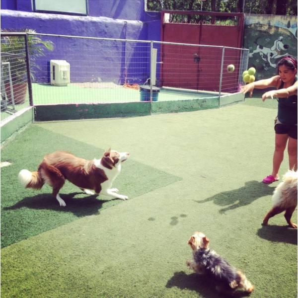 Preços de Hoteizinhos para Cachorro  em Osasco - Hotelzinho para Cachorro em São Paulo