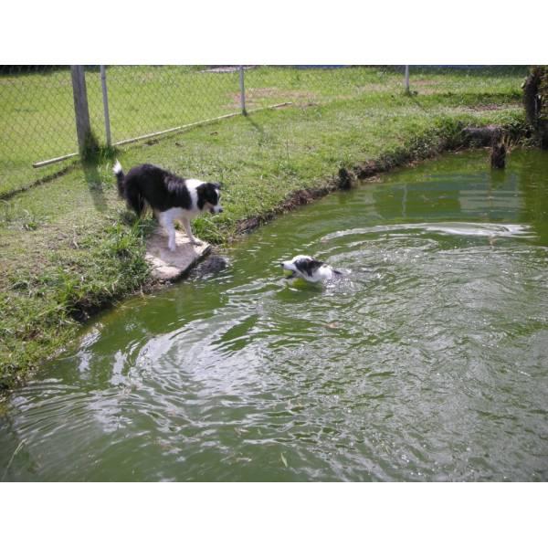 Preços de Hotel de Cachorros em Moema - Hotel para Cães em SP
