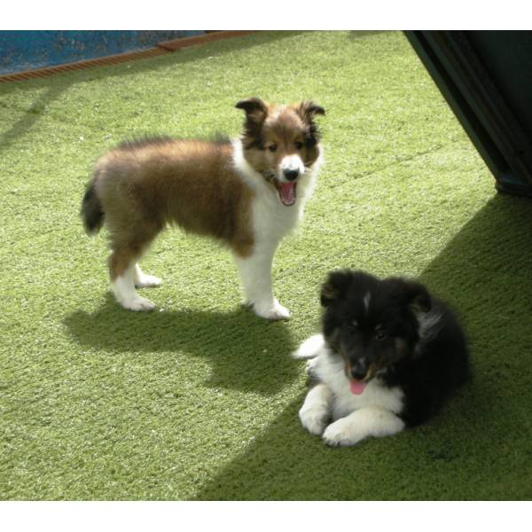 Preços de Hotel de Cães em Barueri - Hotel para Cães em SP