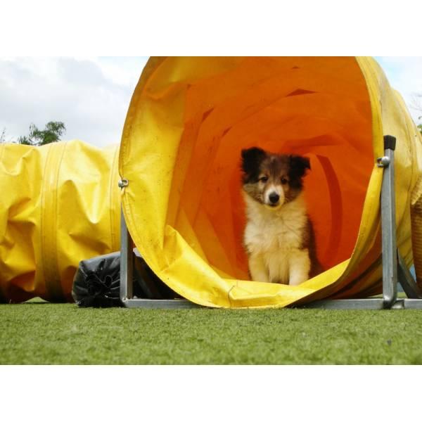 Preços de Hotel de Cão no Rio Pequeno - Hotel para Cães em SP