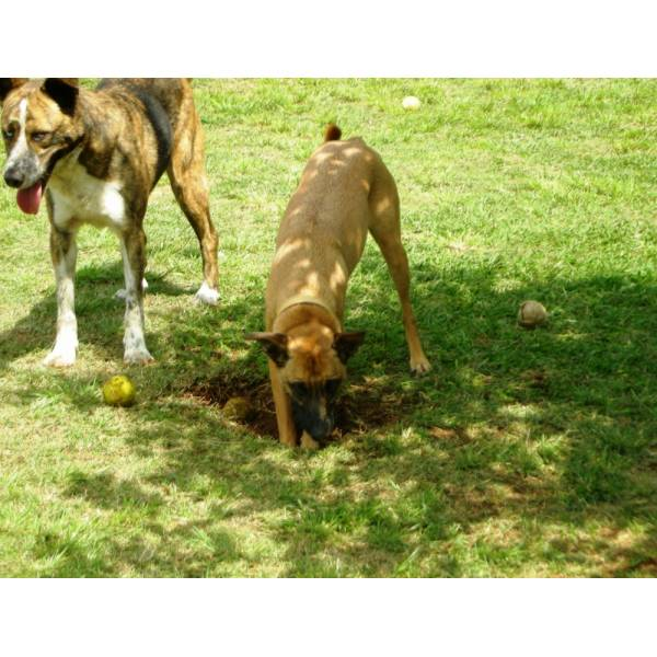 Preços de Hotel para Cachorros em Sumaré - Hotel para Cães em SP