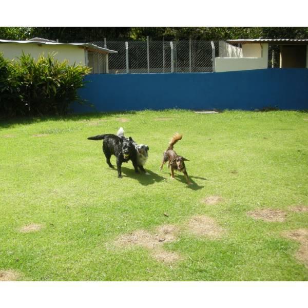 Preços de Hotel para Cães no Jockey Club - Hotel para Cães em SP
