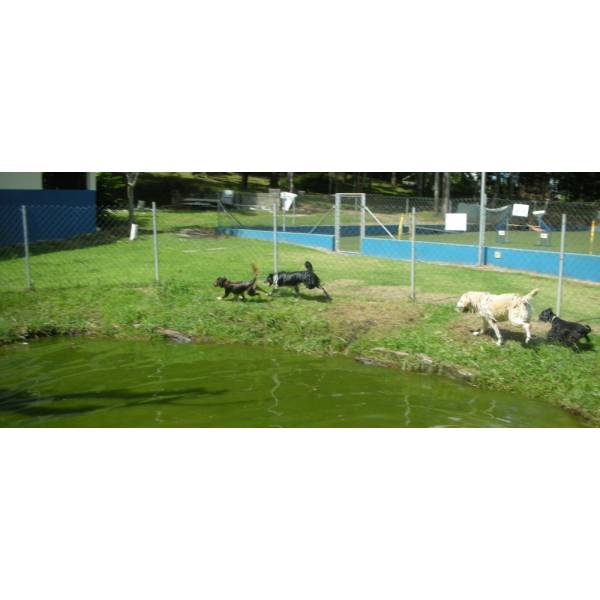 Preços de Hotel para Cão em Itapecerica da Serra - Hotel para Cães em SP