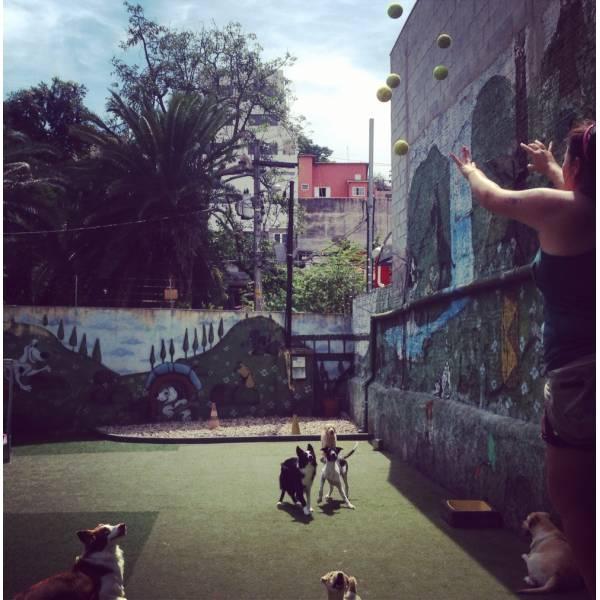 Preços de Hotelzinho de Cachorro no Jardim São Luiz - Hotelzinho para Cachorro em São Paulo
