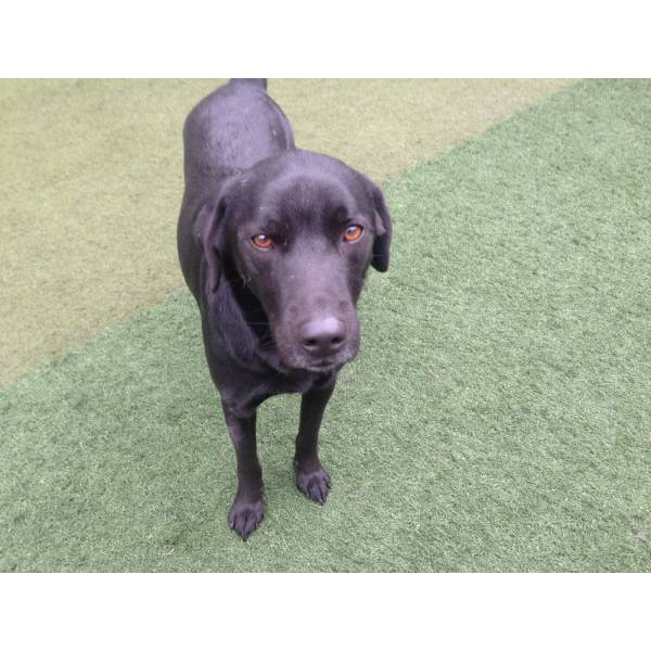 Quanto Custa Adestrador para Cachorro em Santo Amaro - Adestrador de Cães Preço