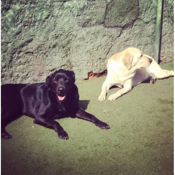 Quanto Custa Adestrador para Cachorros na Vila Mariana - Adestrador Canino Preço