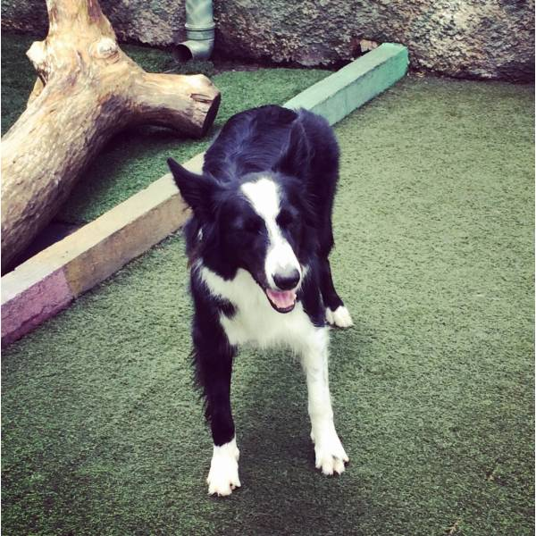Quanto Custa Adestrador para Cachorros no Morumbi - Adestrador de Cãesna Vila Madalena