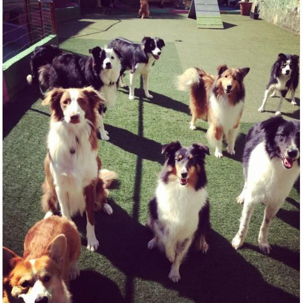 Quanto Custa Adestrador para Cães em Itapevi - Adestrador de Cãesem Pinheiros