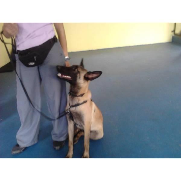 Quanto Custa Adestrador para Cão no Morumbi - Adestrador Canino Preço