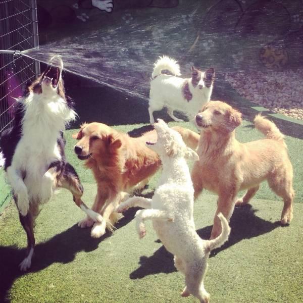 Quanto Custa Daycare de Cão  em Pinheiros - Day Care Canino