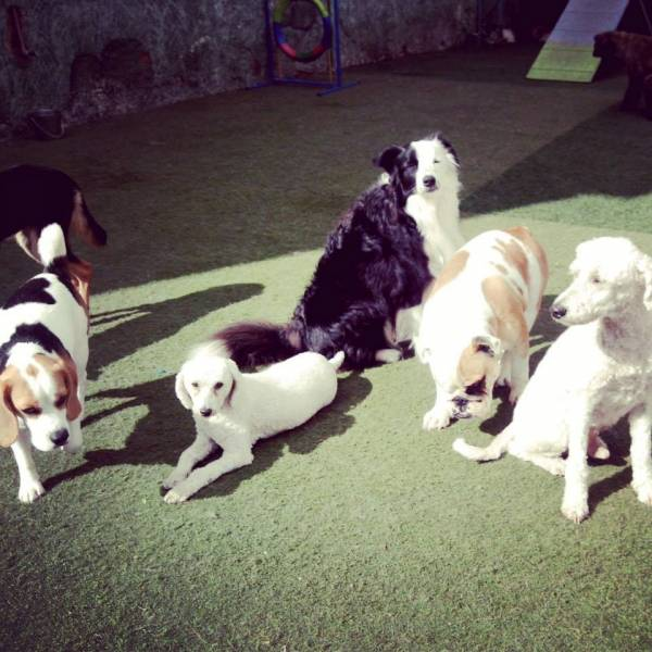 Quanto Custa Daycare no Campo Belo - Day Care Canino
