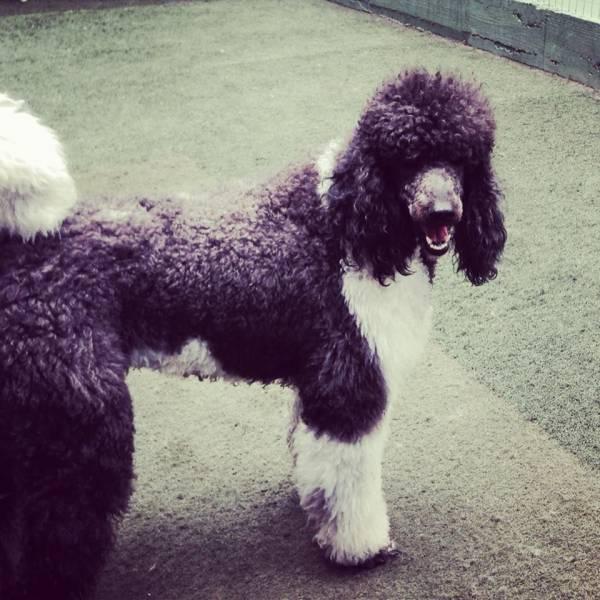 Quanto Custa Daycare para Cachorro em Pinheiros - Day Care Canino