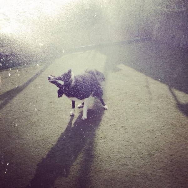 Quanto Custa Daycare para Cachorros em Itapevi - Day Care Canino