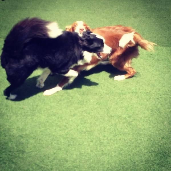 Quanto Custa Daycare para Cães em Pinheiros - Day Care Canino