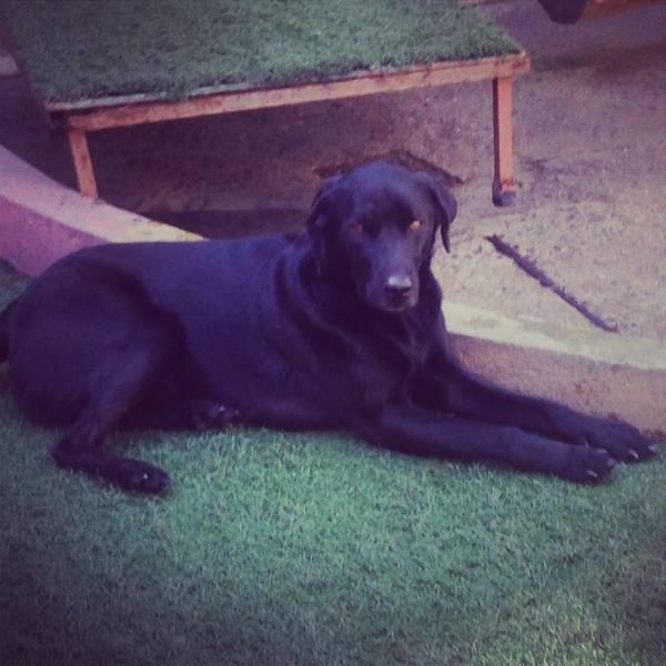 Quanto Custam Adestradores de Cachorro no Ipiranga - Adestrador Canino Preço