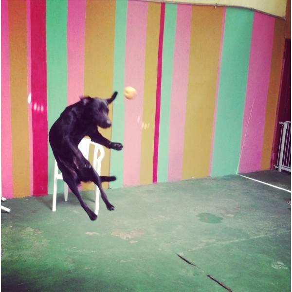 Quanto Custam Adestradores para Cachorro no Campo Belo - Adestrador Canino Preço
