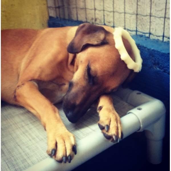 Quanto Custam Adestradores para Cachorro no Itaim Bibi - Adestrador de Cãesna Vila Madalena