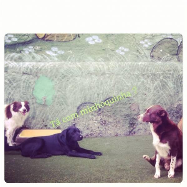 Quanto Custam Adestradores para Cães na Vila Mariana - Adestrador de Cãesna Zona Oeste