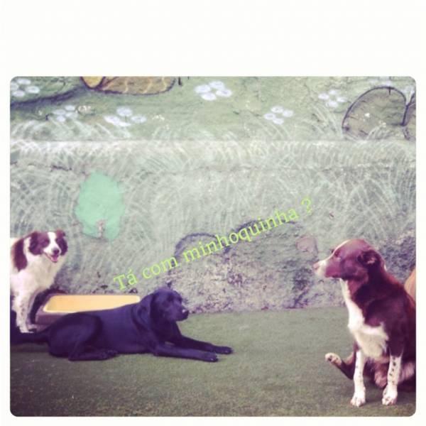 Quanto Custam Adestradores para Cães no Rio Pequeno - Adestrador Canino Preço