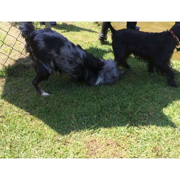 Serviço de Hotel para Cachorro em Barueri - Hotel para Cães em São Paulo