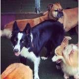 Achar adestrador para cachorro na Pedreira