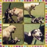 Achar adestrador para cachorro no Jardim Paulistano